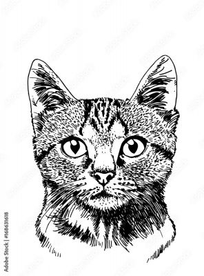 Graficzny Portret Kota Ilustracji Wektorowych Do Tatuażu