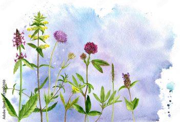 Akwarela Rysunek Kwiaty I Rośliny 192055350 Kwiaty Plakaty