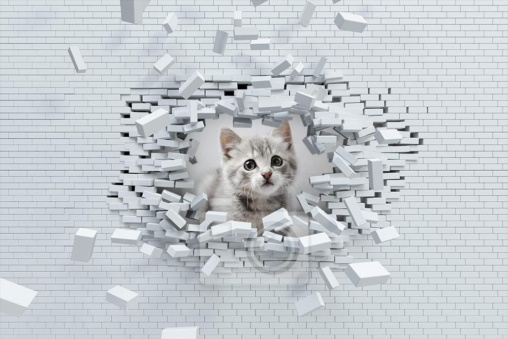 Mały kot w cegłach