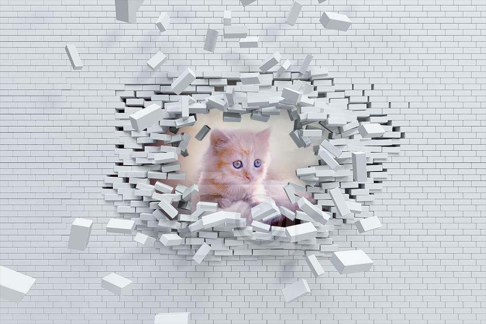 Różowy kot i cegły