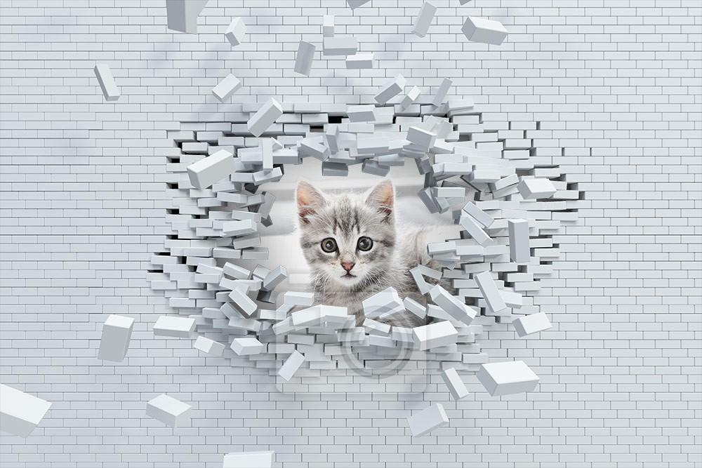 Śliczny kotek w cegłach