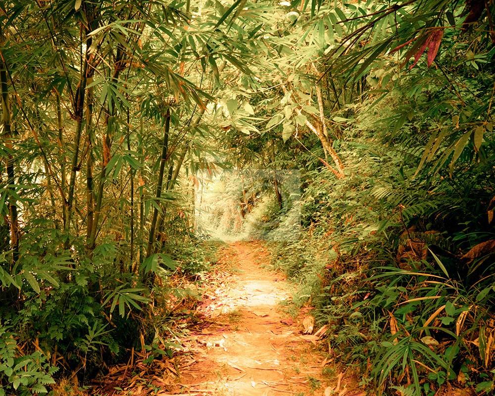 Surrealistyczne barwy krajobrazu w tropikalnym fantastycznym lesie dżungli w tunelu i ścieżki przez gęstą roślinność