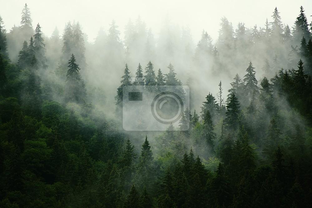 Zielony las we mgle