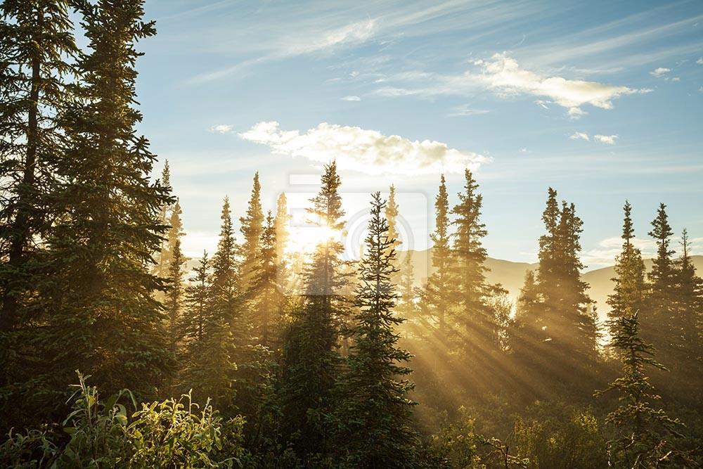 Las z promieniami słonecznymi