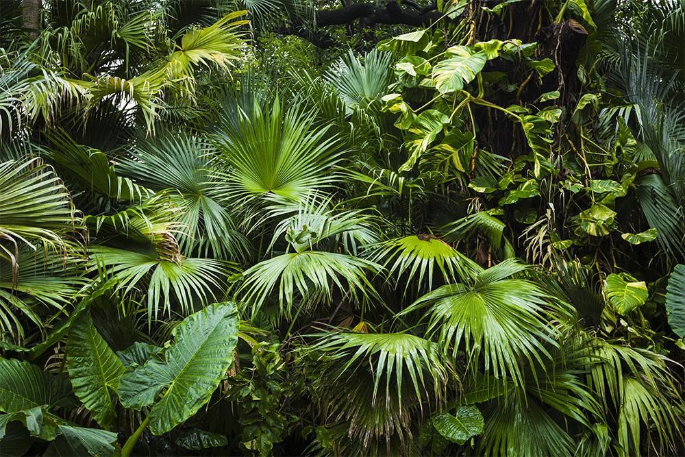 Liście palmowe w klimacie tropikalnym
