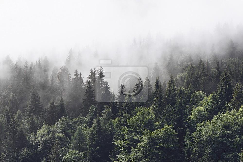 Las w mglistym stoku