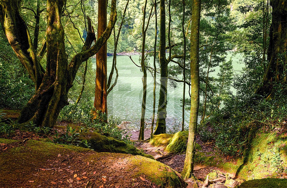 Leśna droga do jeziora