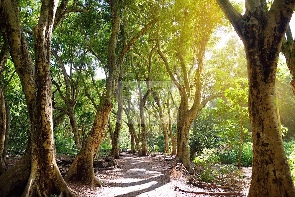 Leśna ścieżka w promieniach słonecznych