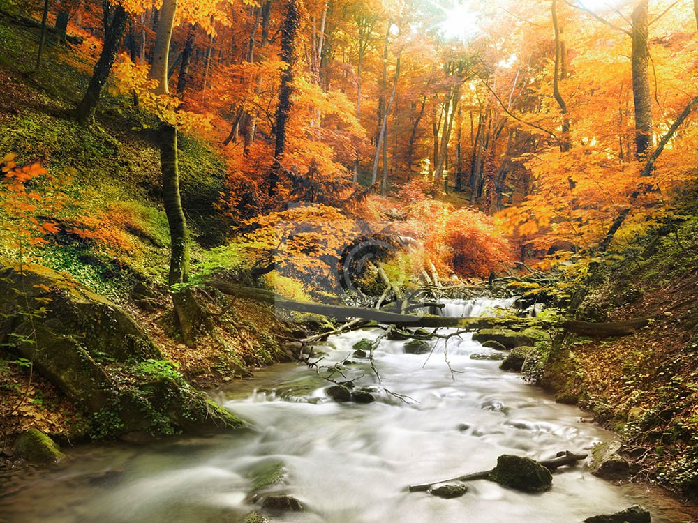 Wodospad w pięknym słonecznym lesie