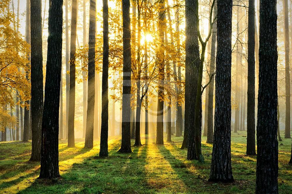 Złoty las z promieniami słonecznymi